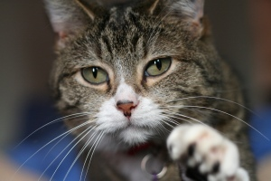 Kittyply_edit1